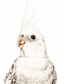 pappagallo3